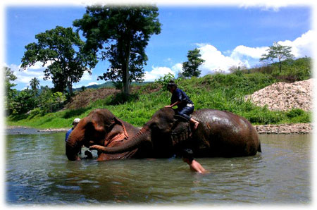 Trekking Tour guest hanging out and playing in the water with some of our elephant sanctuary members
