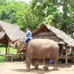 Chiang Mai Elephants Tours and Refuge