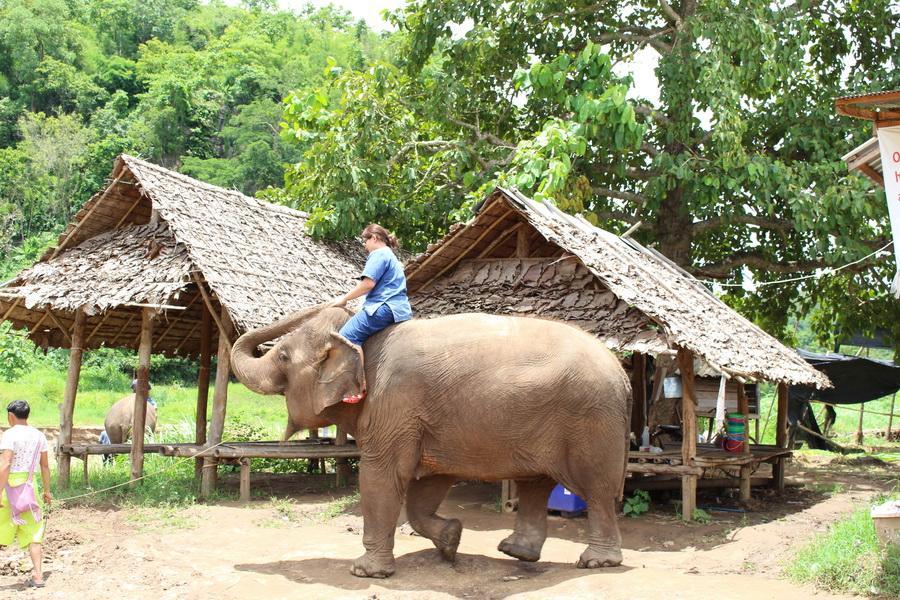 Chiang Mai Elephants Tours and Refuge