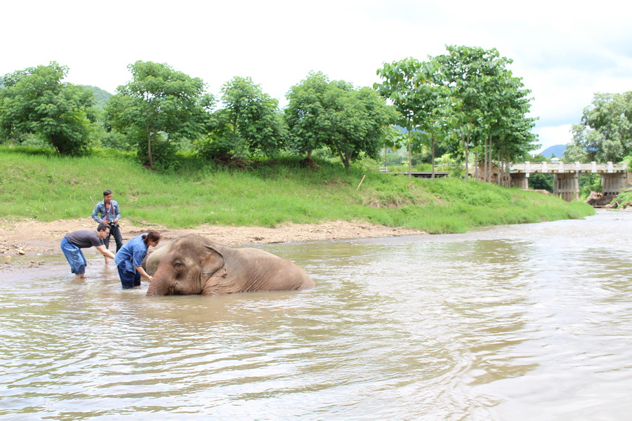 Water time is fun time around Chiang Mai Elephants
