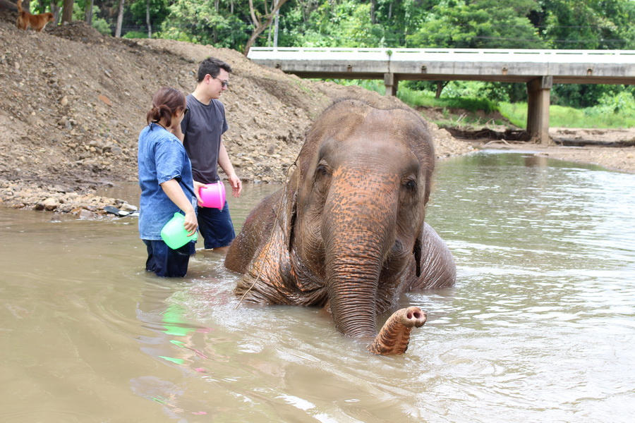 Help an elephant bath when you learn to be a Mahout