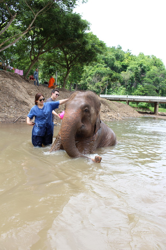 Washing an elephant during a elephant trekking tour
