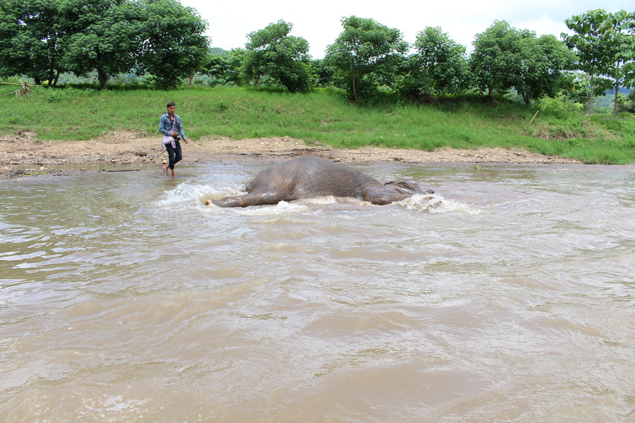 Elephants love playing in the river and so will you on one of our tours