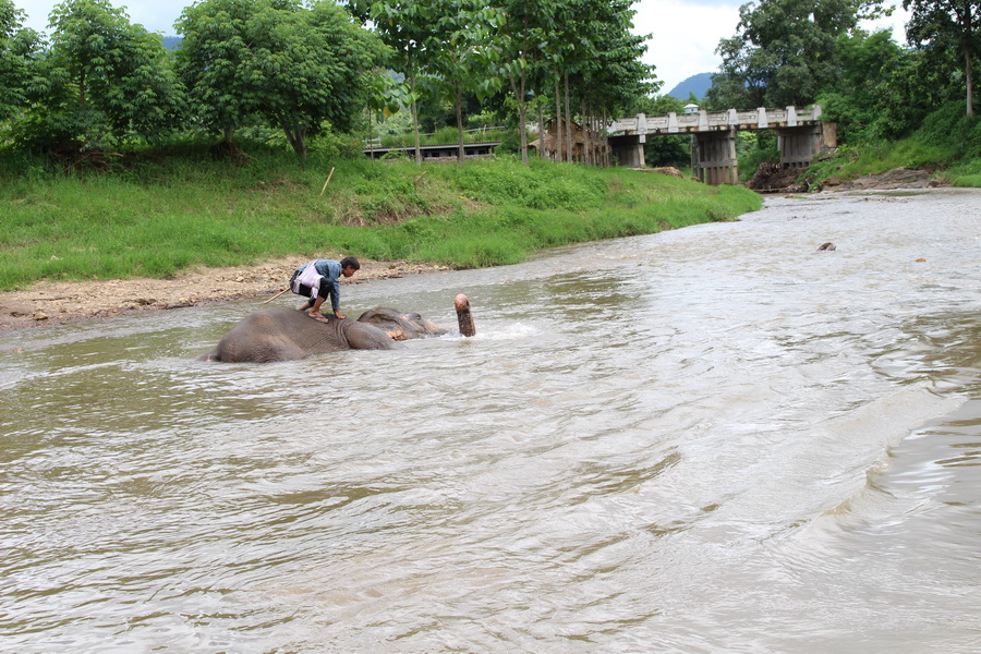 Playing with the elephants in the river