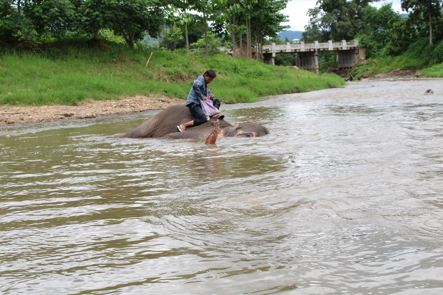 Playing in the river with the elephants
