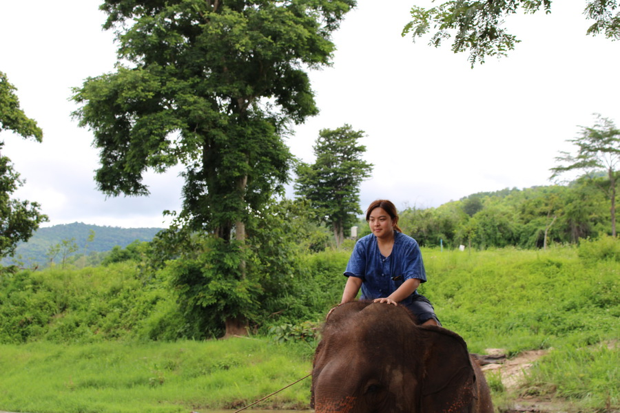 Controlling an elephant after taking a 1 day Mahout training coarse