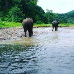 Chiang Mai Thailand Elephant Trekking Tours