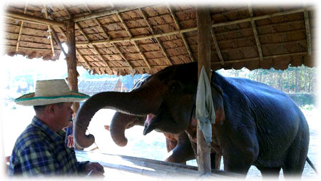 """Somjit """"Pappa"""" Panyamoon playing with Mae Noi in the Elephant Sanctuary"""