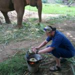 Learning to cook Thai Food at Chiang Mai Elephants.