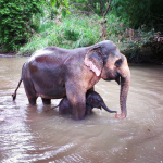 Chiang Mai Elephants Tours