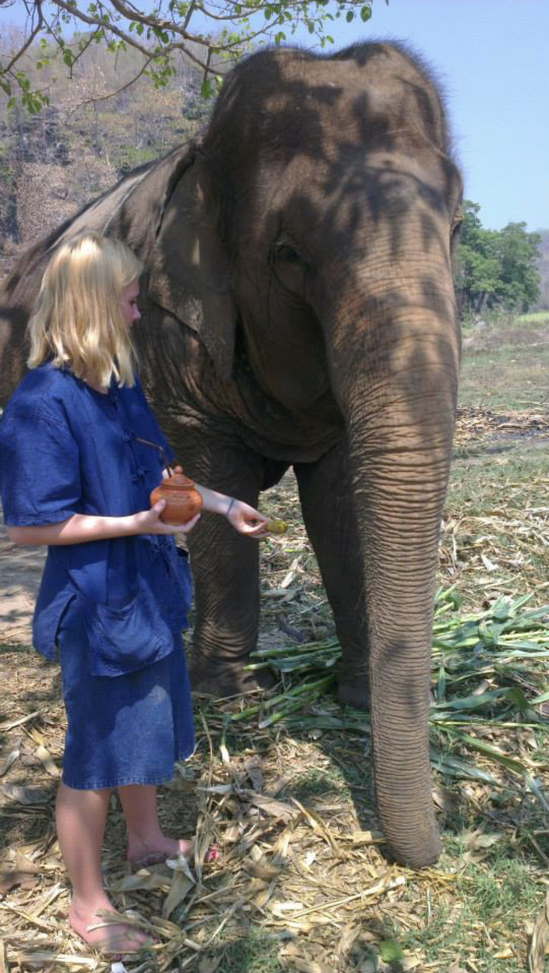Feeding an elephant in Chiang Mai Thailand on a Care giving Experience